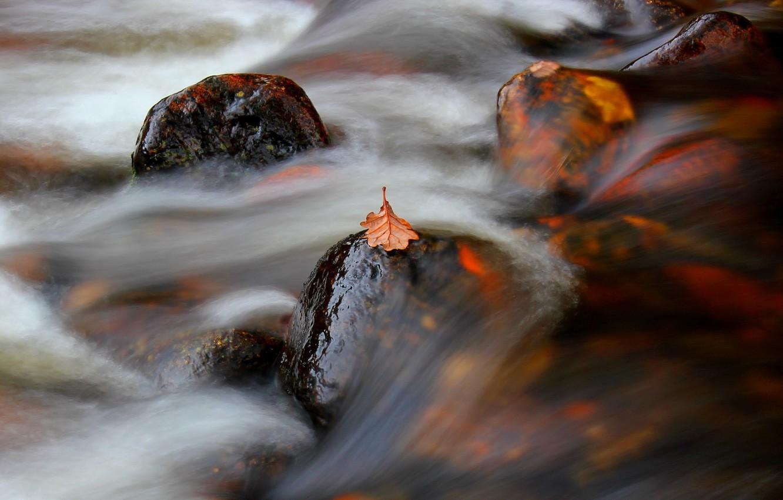 Фото обои природа, лист, река, поток