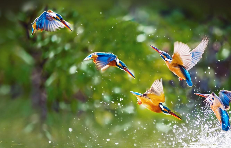 Фото обои вода, полет, брызги, птицы, крылья, стая