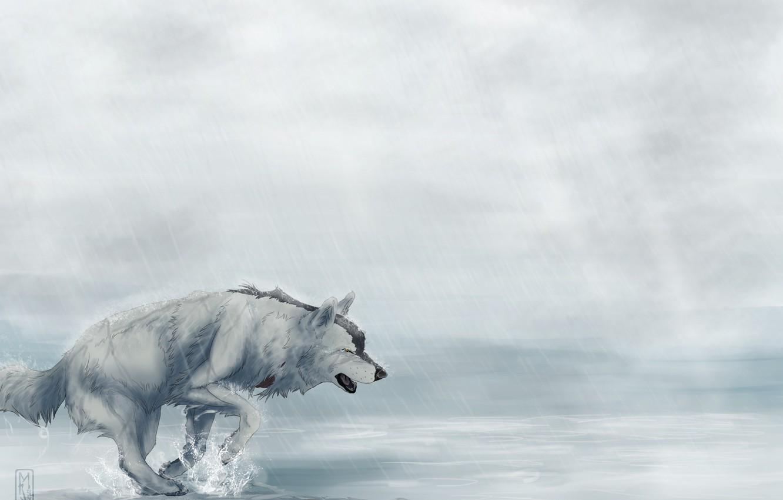 Фото обои дождь, усталость, волк, бежит, art, Мара-Elle