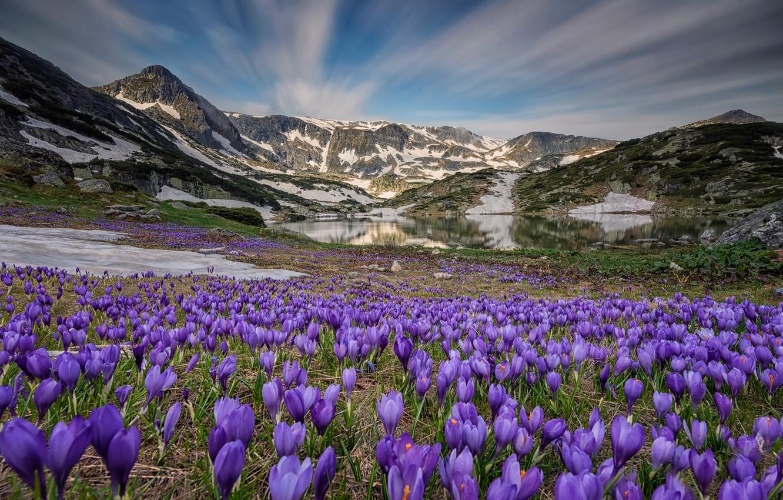 Фото обои небо, цветы, горы, природа, озеро