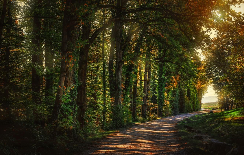 картинки лесной аллеи уже нанесенными них