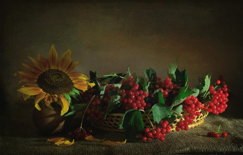 Фото обои ягоды, подсолнух, текстура, калина