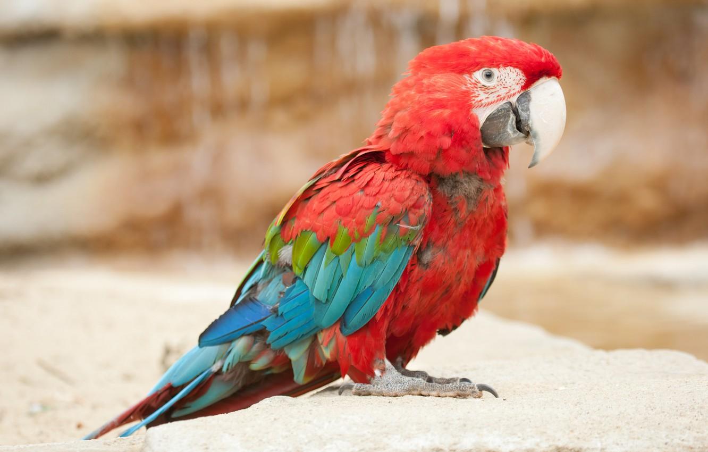 Крупные картинки птиц