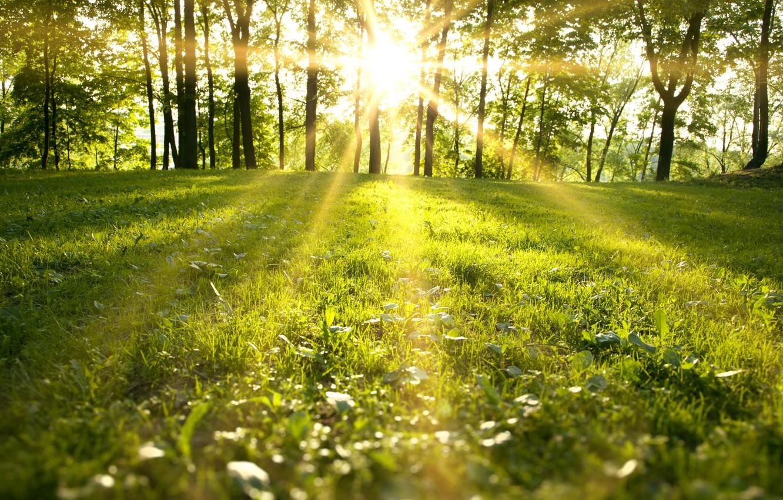 Фото обои лес, трава, деревья, пейзаж, природа, grass, forest, trees, landscape, nature, солнечные лучи, green field, солнечный …