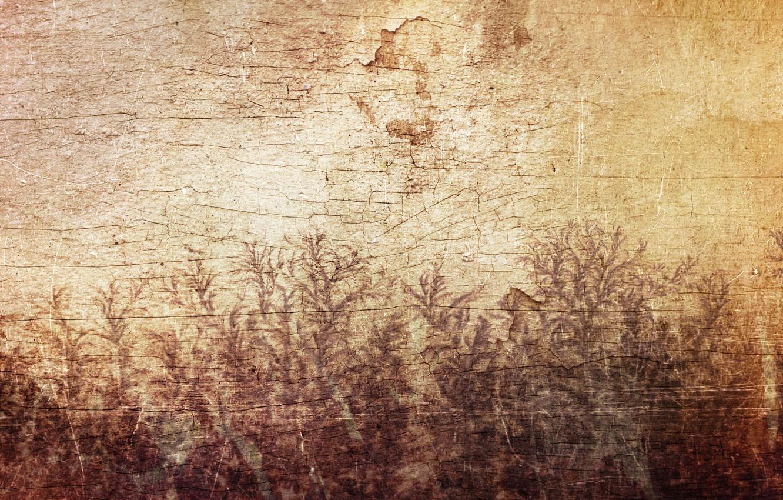 Фото обои листья, трещины, стена, дерево, узор, рисунок, растения, Sirius-sdz, деревяшка