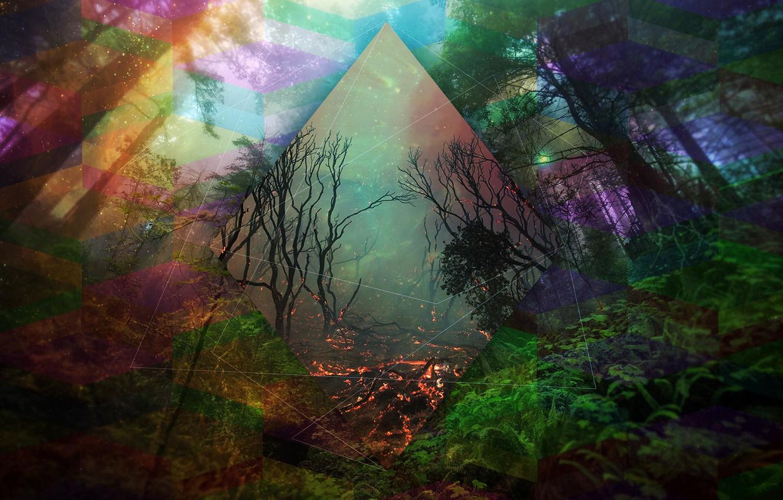 Фото обои лес, деревья, линии, абстракция, цвет