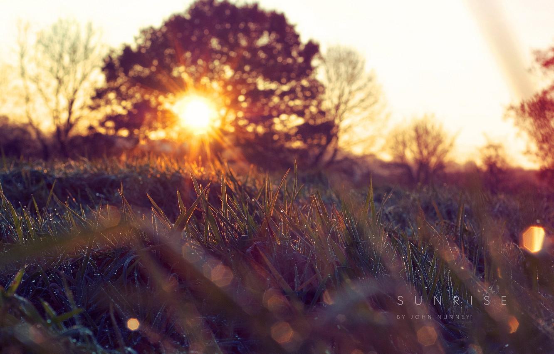 Фото обои трава, солнце, природа, весна, утро, капи