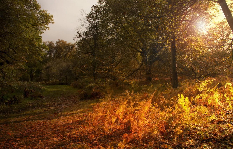 Фото обои осень, пейзаж, природа