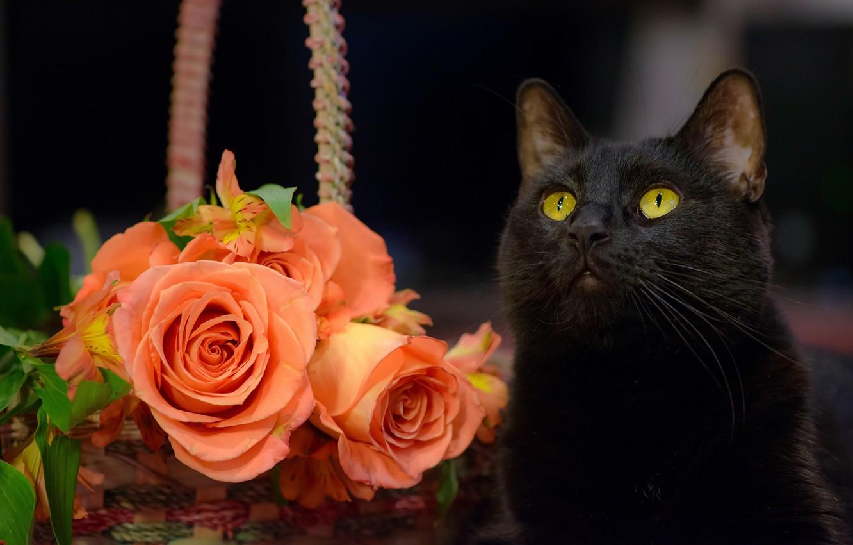 Черная кошка открытки