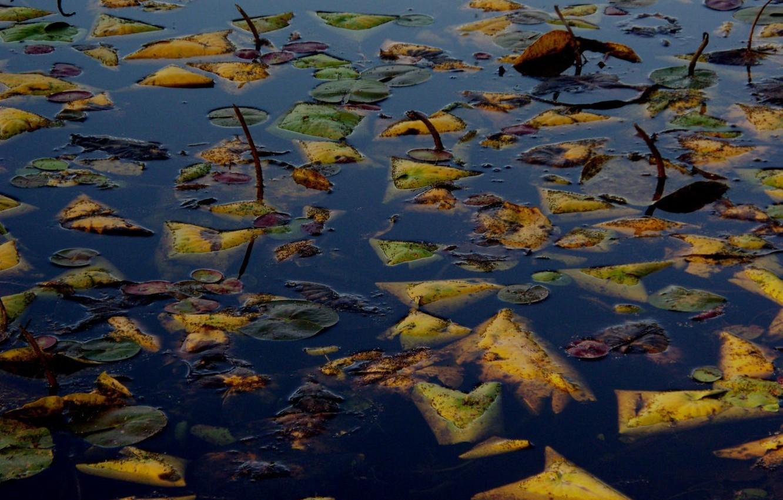 Фото обои осень, листья, вода, озеро, гладь, утонули