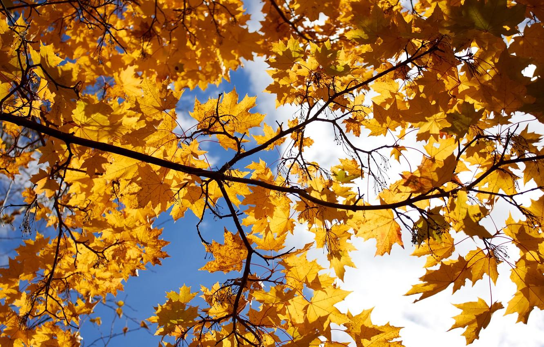 картинки осень листья падают красивые монтеррей купить