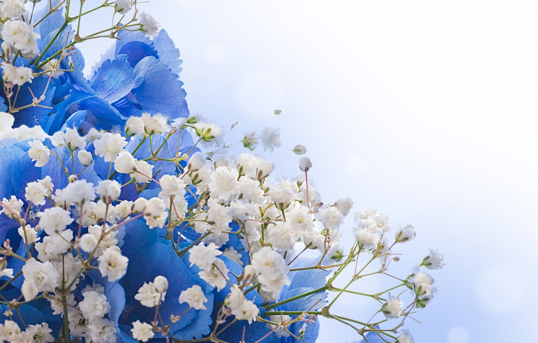 Открытки с синими цветами фото, картинки приколы открытки