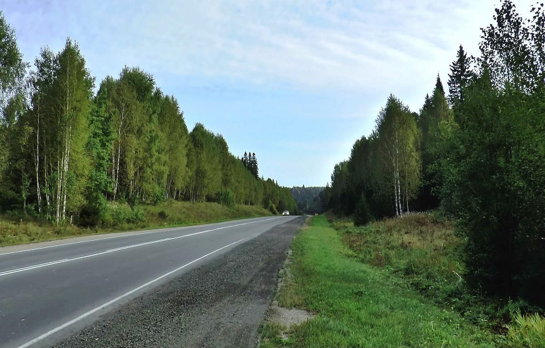 Фото обои лес, лето, Дорога, тайга, Сибирь