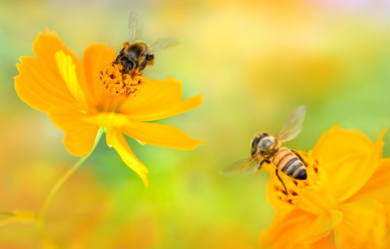 Шикарные цветы фото обои