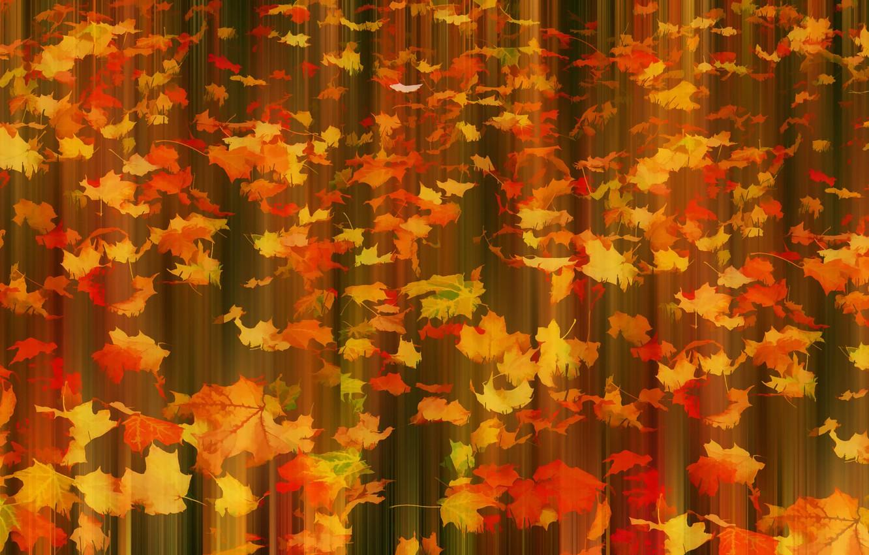 Фото обои осень, листья, Fall in motion