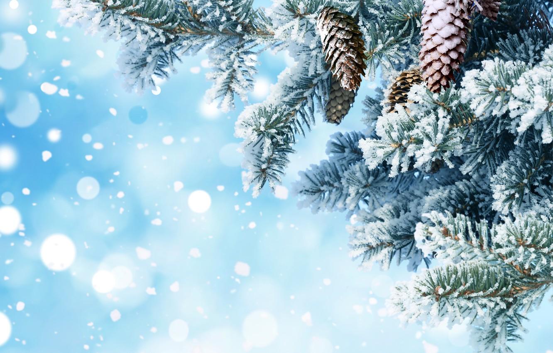 Фото обои снег, иголки, ветки, фон, елка, Новый год, шишки