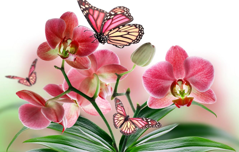 Обои Коллаж, крылья, цветы. Разное foto 10