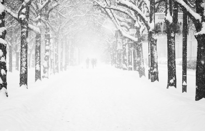 Фото обои холод, зима, иней, дорога, женщины, девушка, деревья, снежинки, люди, города, девушки, дерево, улица, женщина, человек, …