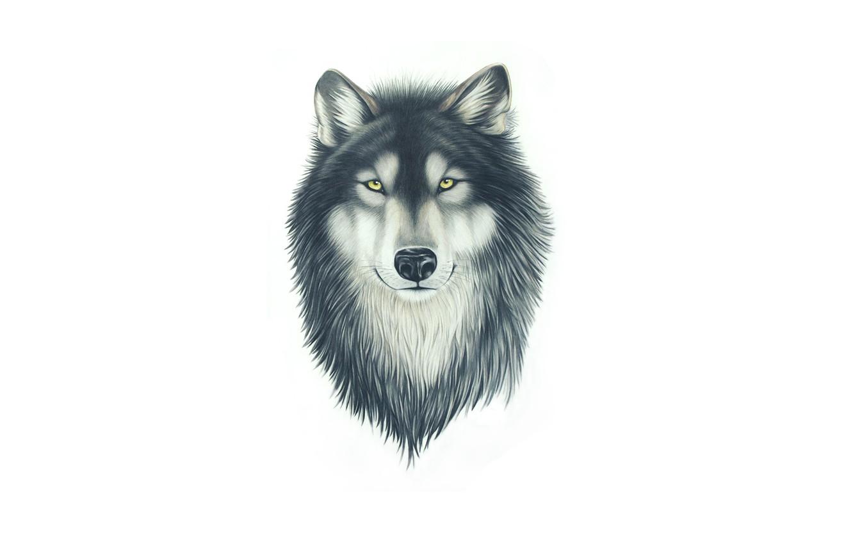 Фото обои морда, волк, собака, голова, живопись, wolf