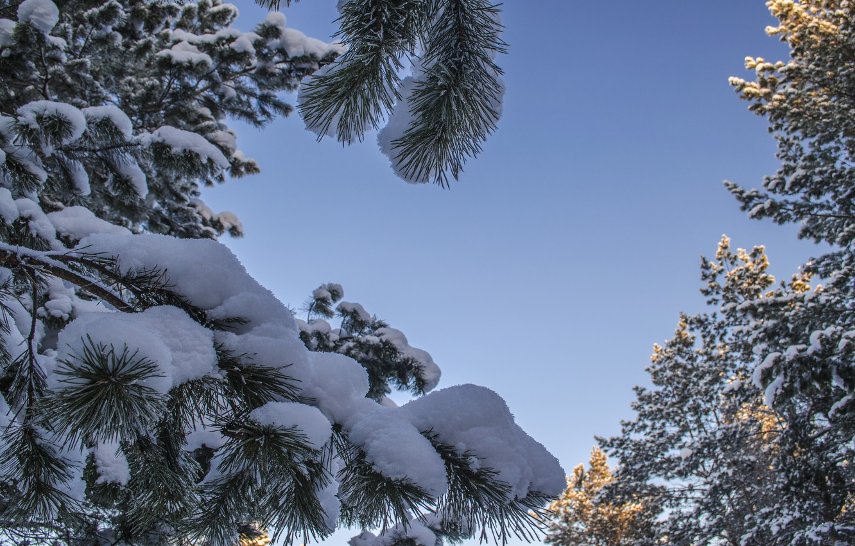 фото красивые ели под снегом только закончился