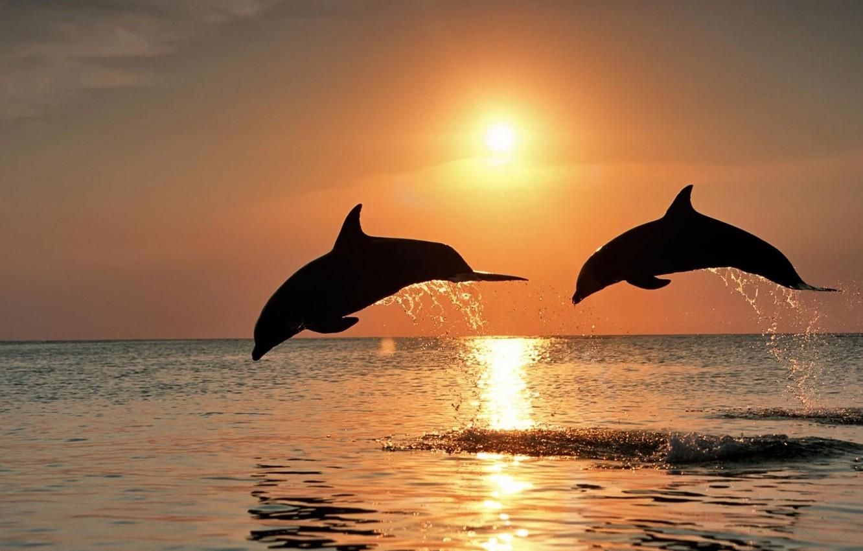Обои дельфины. Животные foto 17