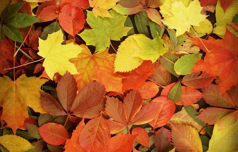 Фото обои осень, листья, autumn, leaves, fall