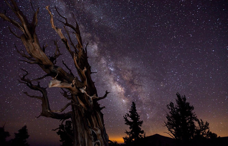 Фото обои небо, деревья, ночь, выдержка, Млечный путь, победитель конкурса астрономической фотографии :-)