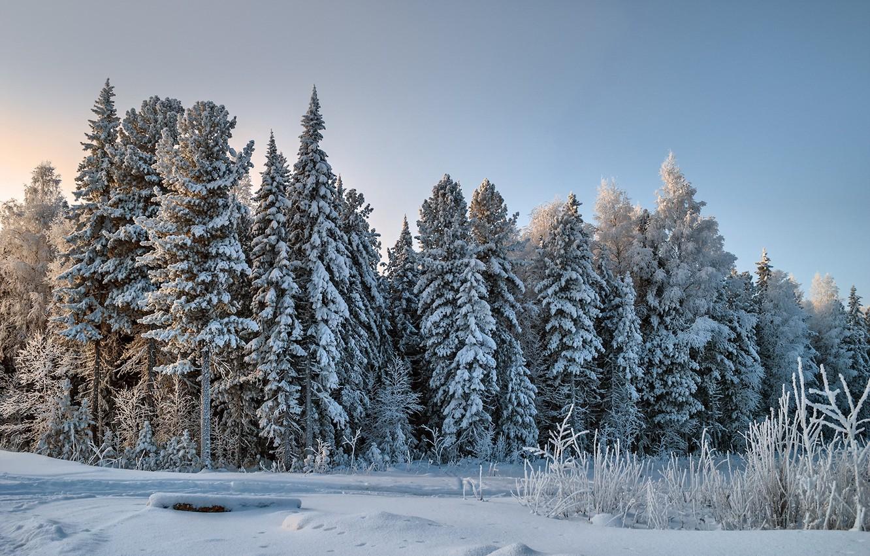 Фото обои зима, лес, снег