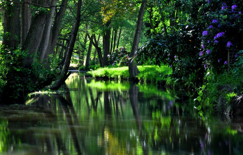 Фото обои трава, вода, деревья, цветы, природа, парк, отражение, дерево, green, HDR, hdr, зеленые, grass, красивая, trees, …