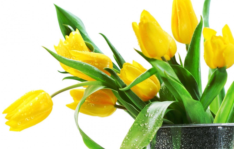 Фото обои цветы, Тюльпаны, красивые