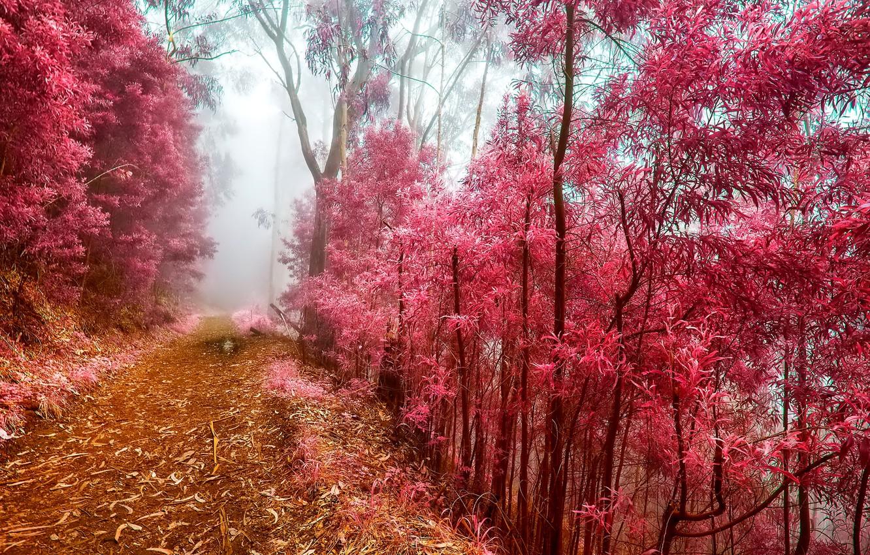 Фото обои иней, осень, лес, деревья, туман, утро, тропинка