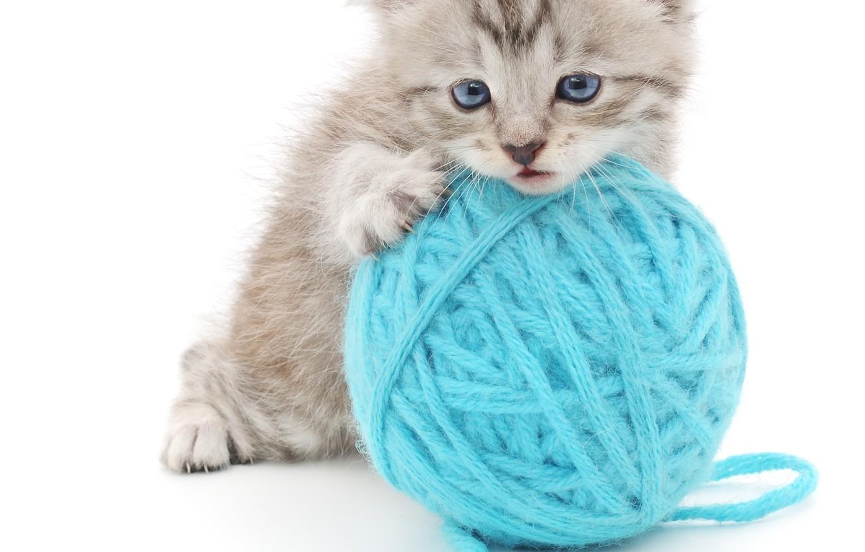 Фото обои клубок, котенок, белый фон, пушистик