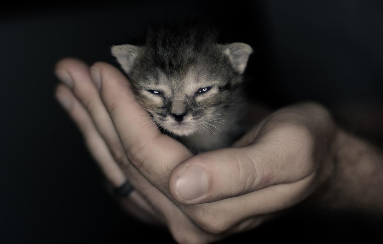 Фото обои рука, малыш, мордочка, котёнок, котэ