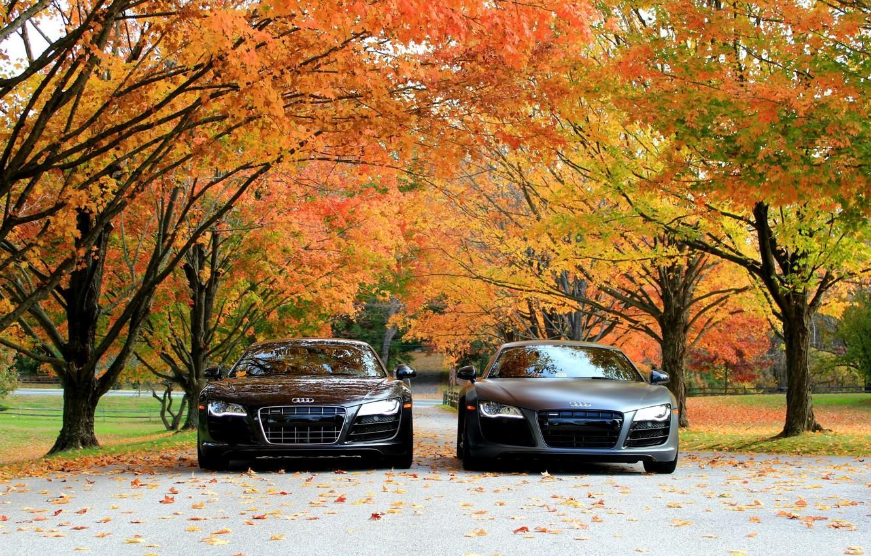 Обои машины, audi r8 v10, осень. Автомобили foto 6