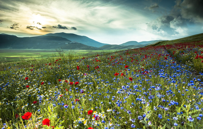 Фото обои поле, цветы, горы, природа, маки, ромашки, Италия, васильки