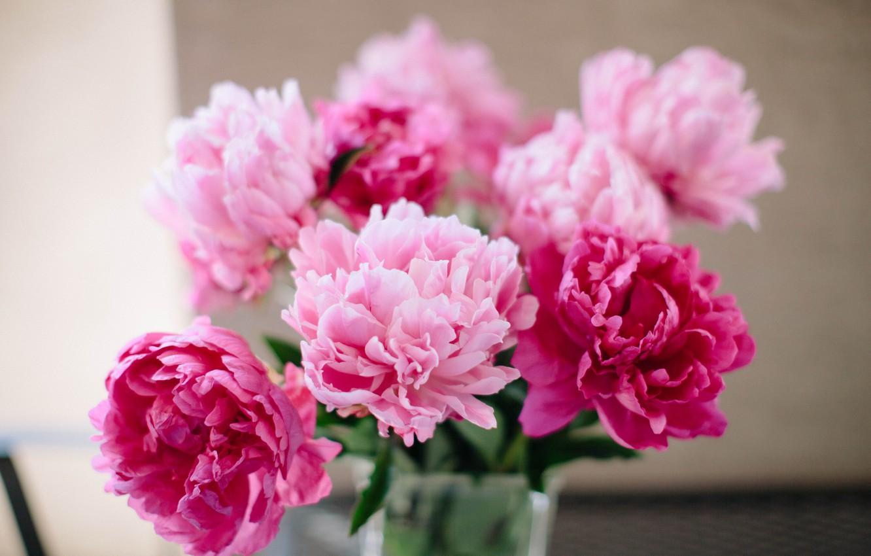 Фото обои цветы, лепестки, пионы