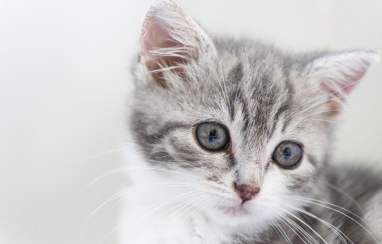 Фото обои фон, малыш, мордочка, котёнок