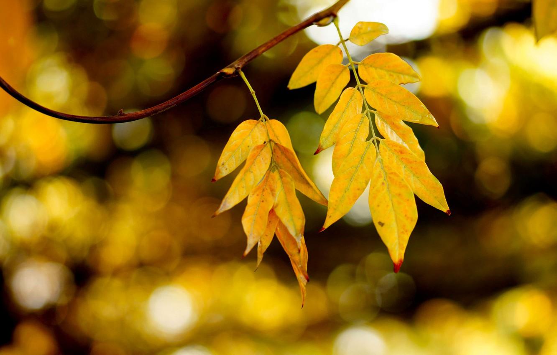 Фото обои осень, листья, блики, ветка