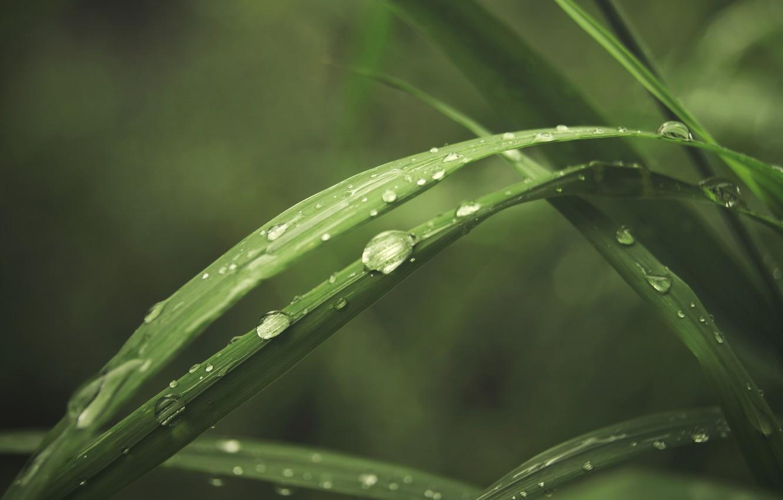Фото обои зелень, трава, капли, макро, роса