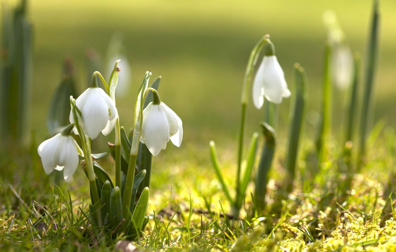 Картинки весны в высоком качестве