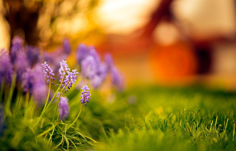 Фото обои трава, закат, цветы, боке
