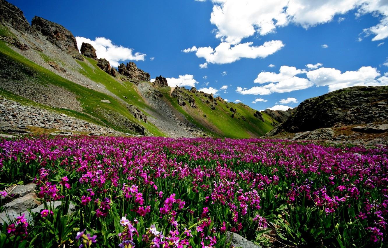 проблем, цветущие горы фото строгинского моста