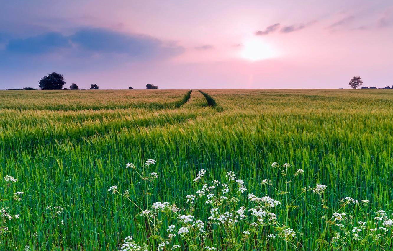 Фото обои поле, лето, небо, трава, облака, цветы, природа, вечер