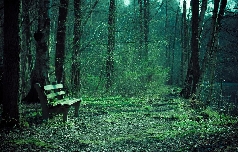 Фото обои природа, парк, скамья
