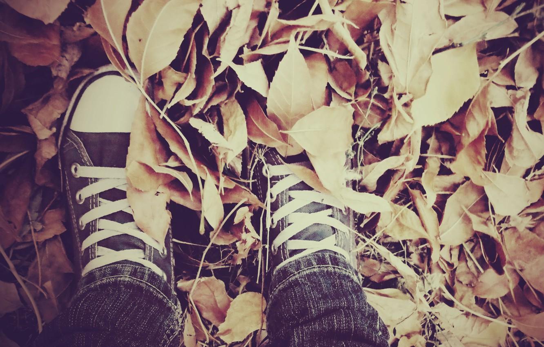 Фото обои осень, листья, кеды, шнурки