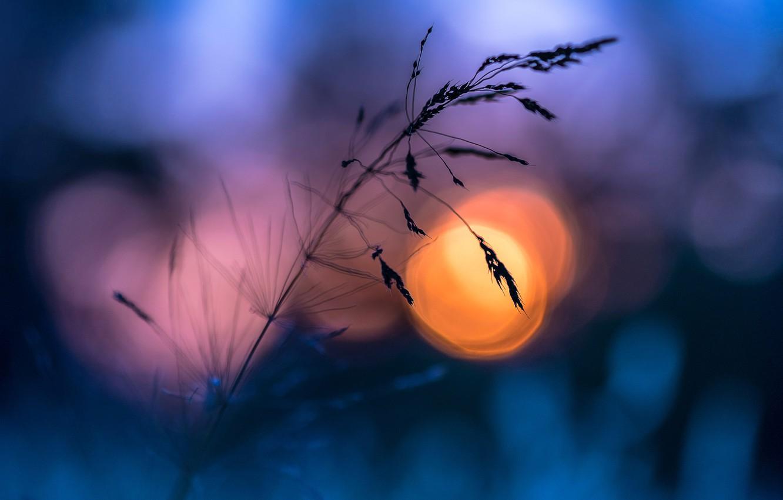 Фото обои лето, трава, солнце, макро, вечер, боке