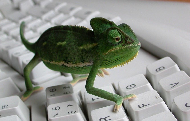 Фото обои хамелеон, клавиатура