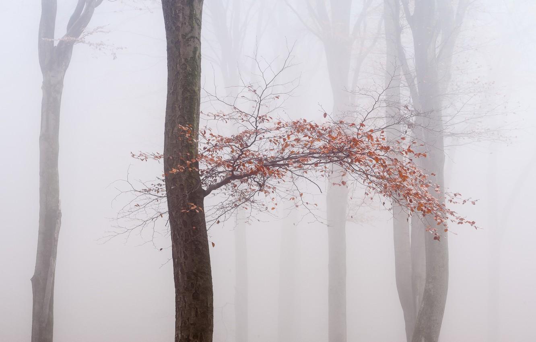 Фото обои осень, туман, дерево
