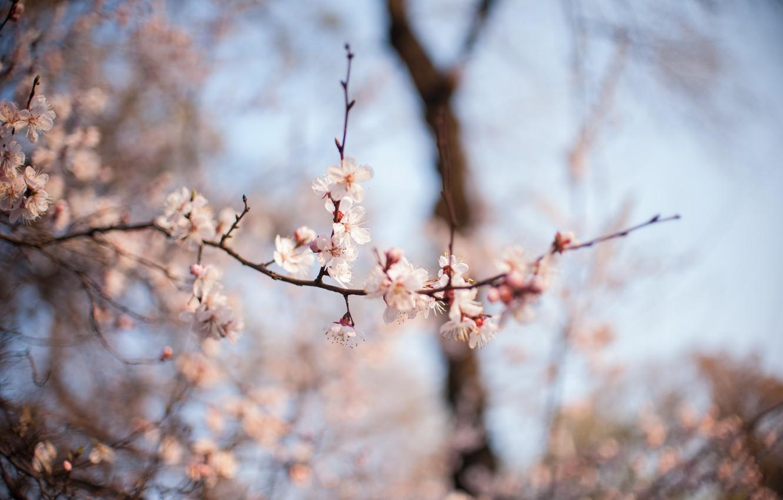 Фото обои макро, цветы, весна, цветение, боке
