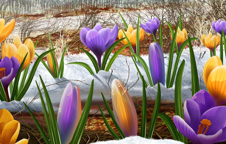 Фото обои рисунок, весна, подснежники, первоцвет